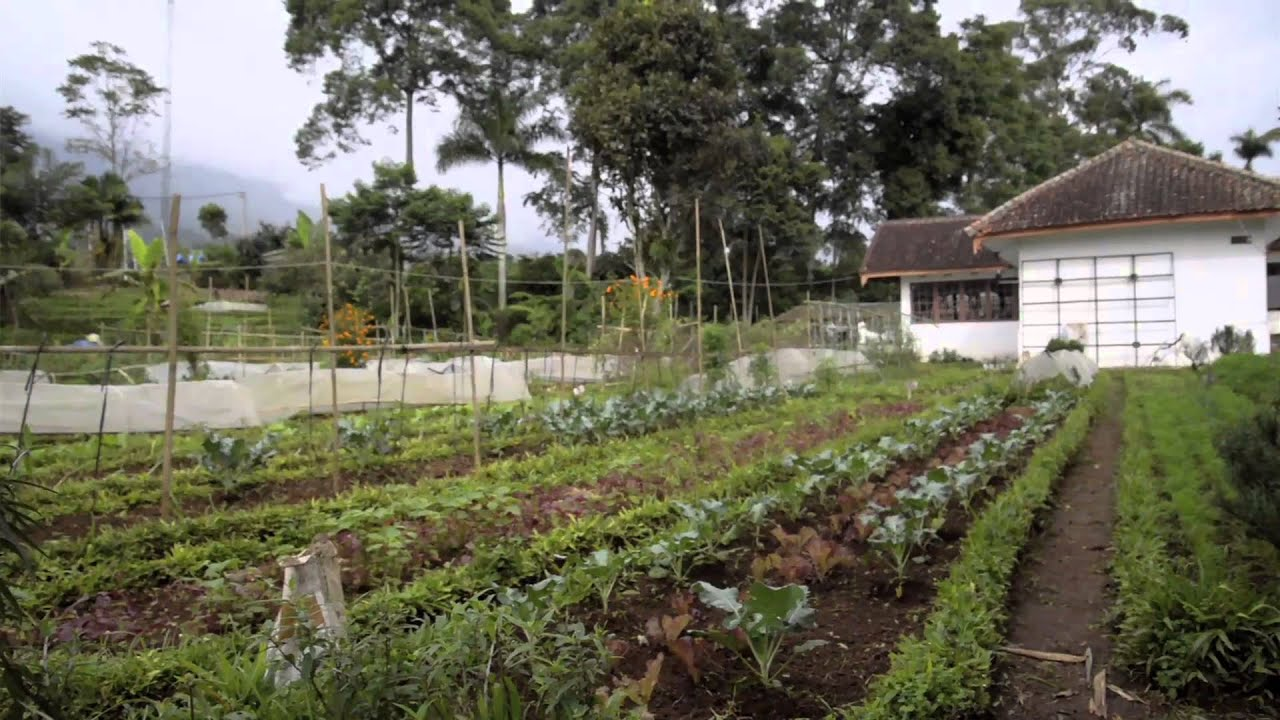 Altine Documentary - The Learning Farm/Karang Widya Indonesia