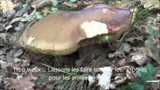 Journée au cépe   Les Dupont Des Landes