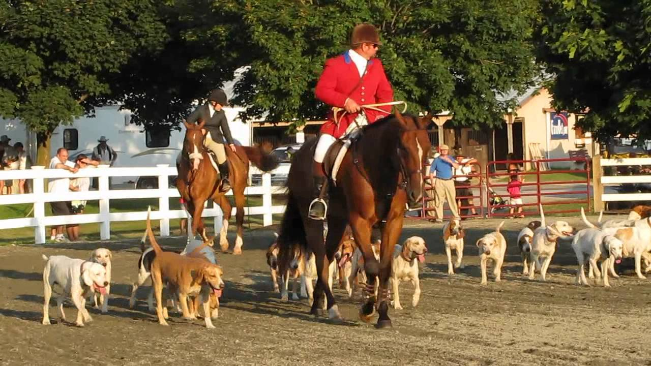 Horse and Dog fox hunt Demonstration at New Jersey State ...