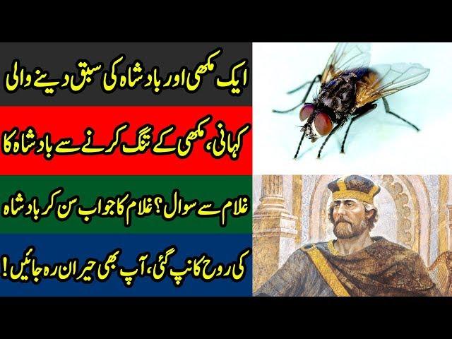 Ek Badshah Or Makhi Ki Kahani | Zero Point