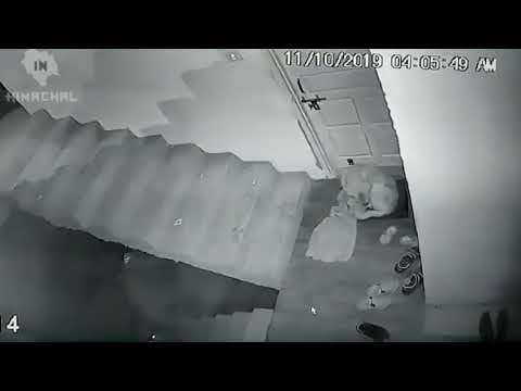 Леопард напал на Собаку  пока она спала