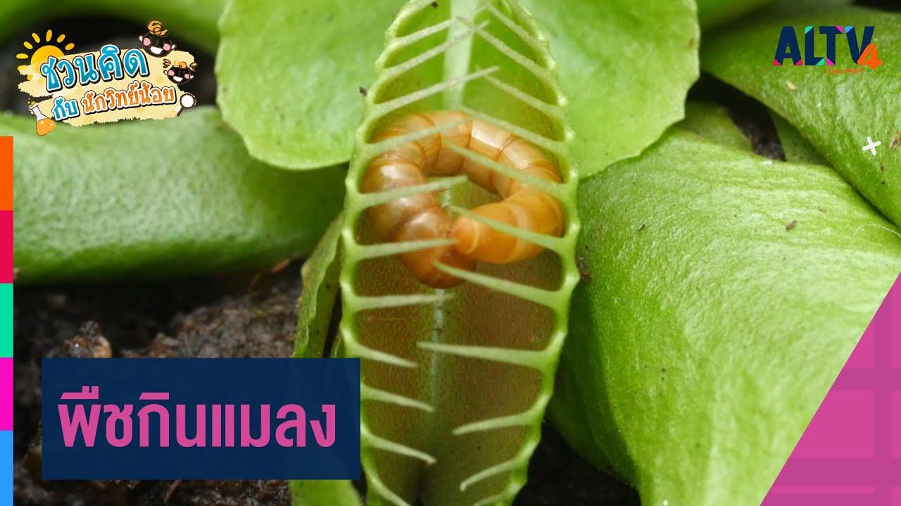 พืชกินแมลง : ชวนคิดกับนักวิทย์น้อย (9 ก.พ. 64)