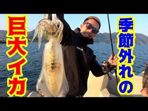 今の時期に釣れるはずがない巨大イカが釣れた!!!