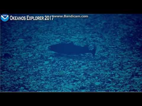 Okeanos Kingman Reef