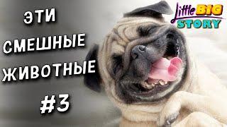 Смешные Видео с Животными Самые смешные животные 3