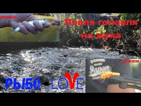 В поисках голавля  Река Кондурча  Вяжем жука  Что за рыба  Нахлыст