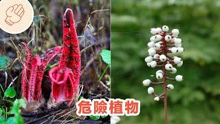 如果你看見這種植物,趕緊離開!