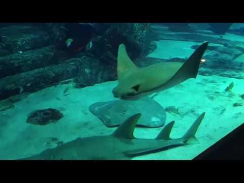 The Lost Chambers Aquarium Atlantis Dubai दुबई में बना हुआ दुनिया का सबसे बड़ा मछली घर