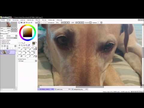 dog photo study speedpaint