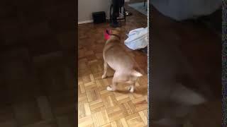 Lucky Dog Animal Rescue's Tony