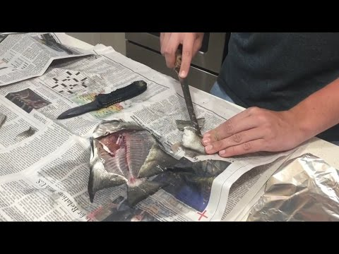 CATCH AND COOK: Atlantic Spadefish *GRAPHIC
