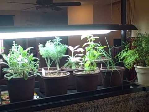 Indoor Kitchen Herb Container Garden And Seedlings Growing Under Led Energy Saving Lights