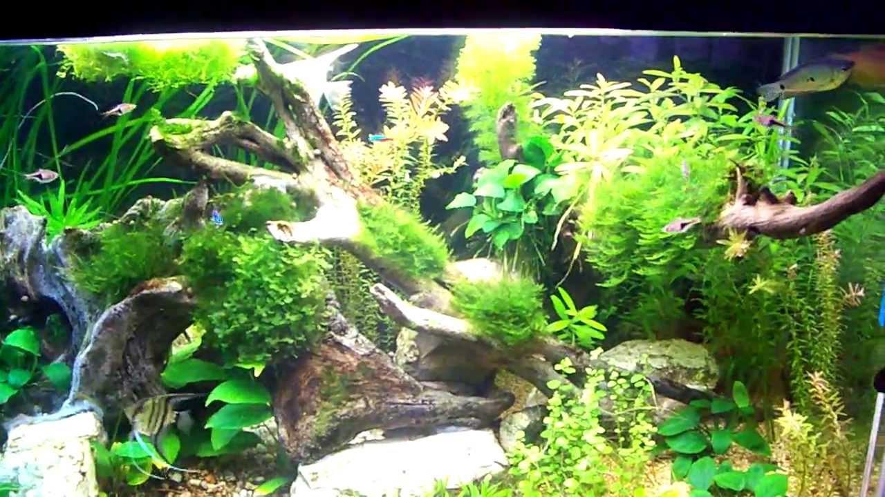 Allestimento acquario acqua dolce con piante finte for Acqua acquario