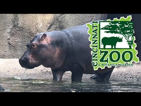 Cincinnati Zoo 2018 Tour & Review with The Legend