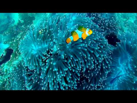 SCUBA Diving Marine Parks of Malaysia - Underwater Video HD