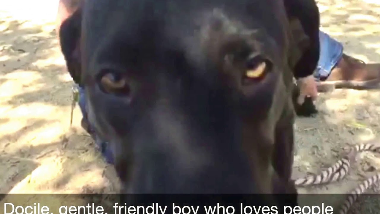 Finn Needs Out Of The Santa Clara County Animal Shelter San