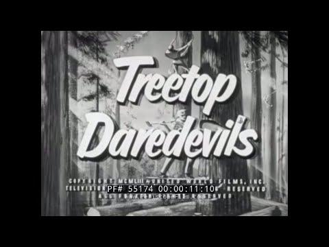 1950s LUMBERJACK & LUMBER INDUSTRY FILM
