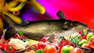 Готовим вкусно - рыба на овощах. Быстрые и простые рецепты для дома .