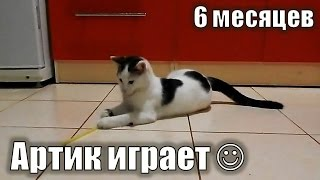 Супер кот! Играющий котенок, милый котенок Артик:) Котенку 6 месяцев)