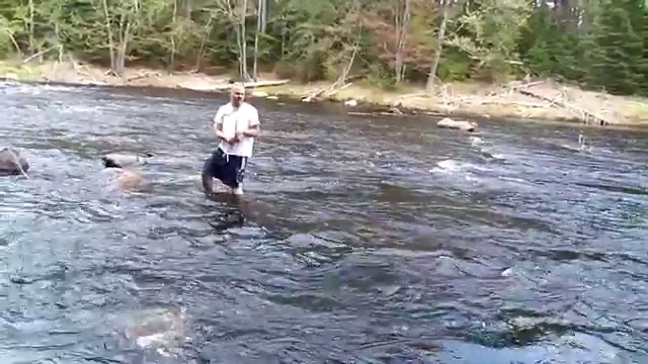Fly fishing for brook trout on crooked river harrison for Fly fishing maine