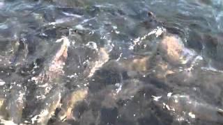 San Joaquin FISH HATCHERY