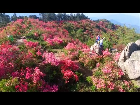 Blooming flowers cover the Chinese countryside