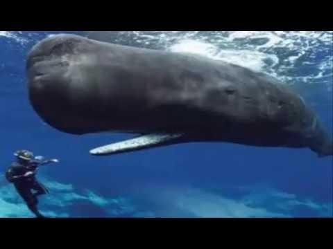حقائق عن لسان الحوت الأزرق Youtube