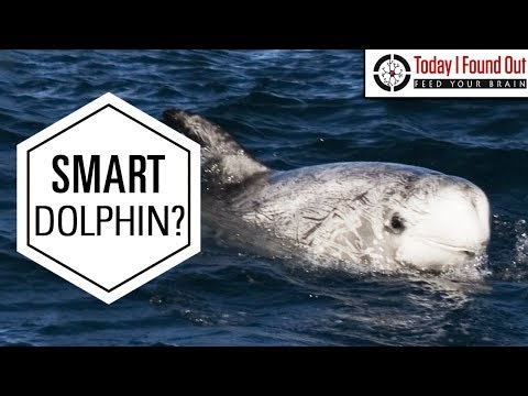 The Truth About Pelorus Jack