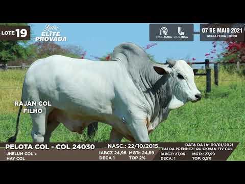 LOTE 19   COL 24030