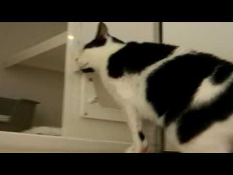 Meet Eddie At York Cats Protection Adoption Centre! 4/4