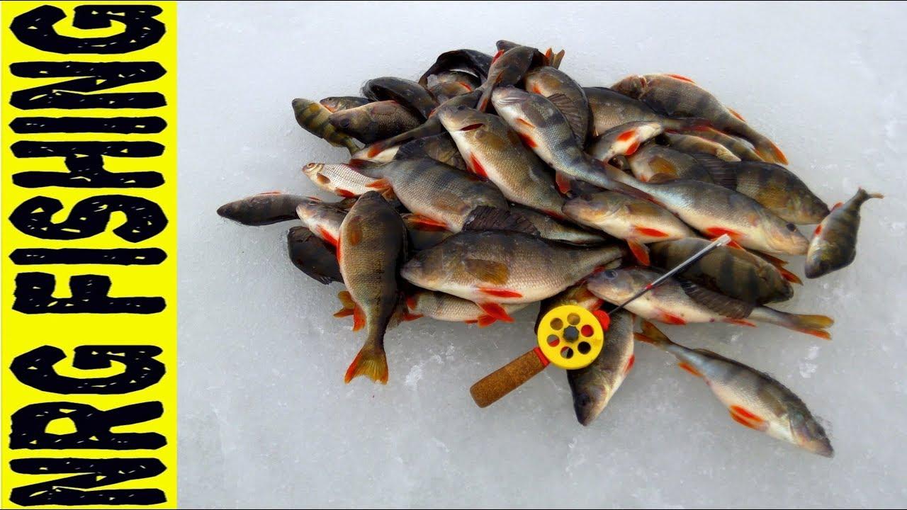 Рыбалка на КРУПНОГО ОКУНЯ | снасть ЛЕСОТКА и ЧЁРТИК