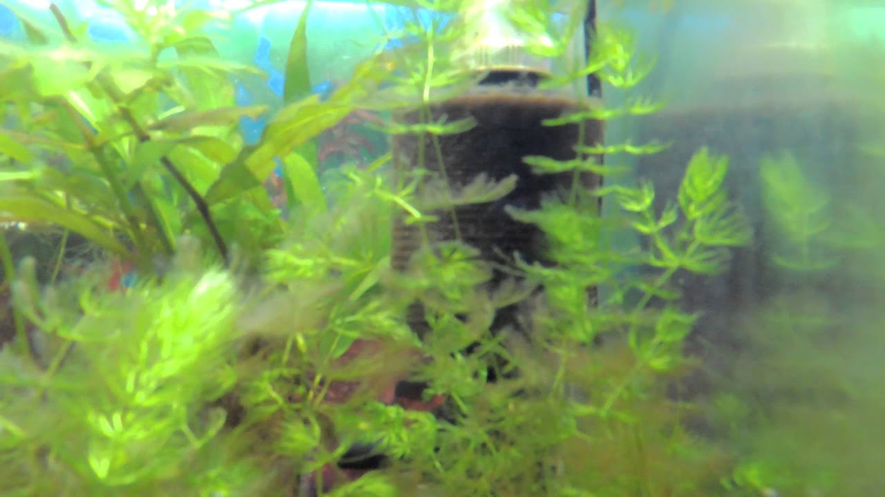 white fungus problem in the fish tank youtube ForFungus In Fish Tank