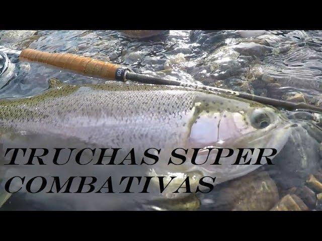Pesca de Truchas Super Combativas I