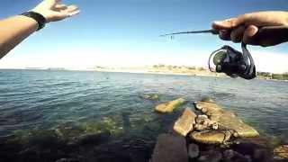 Ловля ласкиря на креветку(Черное море)