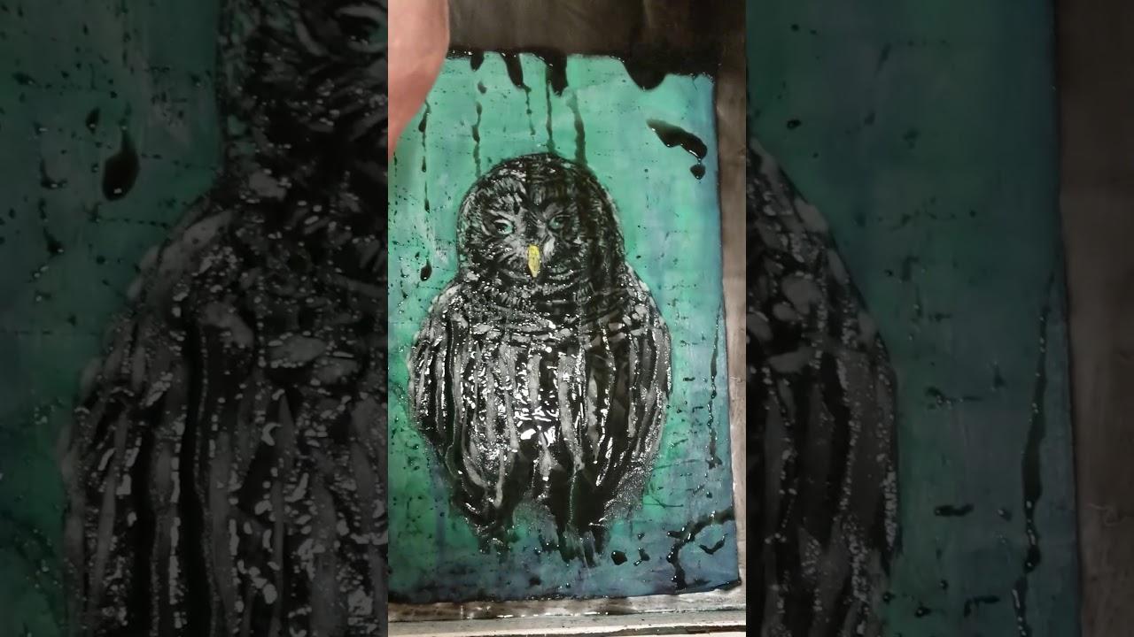 VIDEO- Barred Owl Process