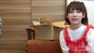 HKT48/AKB48の宮脇咲良さんと、愛猫のまるちゃんとのやりとりのひとコマ...