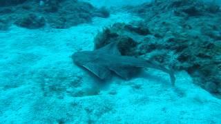 Video Angel Shrak - Tenerife 2012.AVI download MP3, 3GP, MP4, WEBM, AVI, FLV September 2018