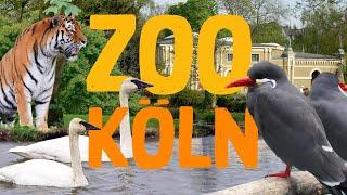 Zoo Köln | Zoo Eindruck 2020