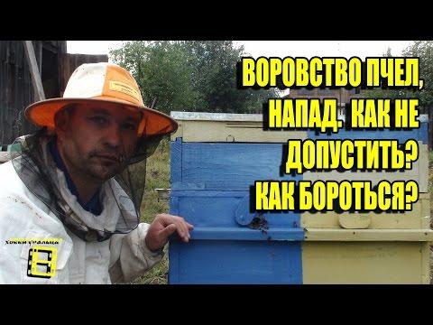 Напад пчел и воровство на пасеке