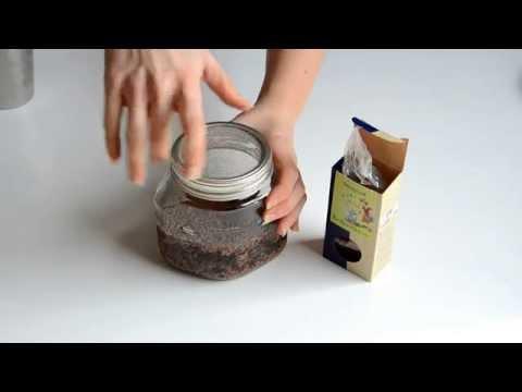 Klíčení semínek - bio ředkvička. Sprouting sprouts - raw bio radish.