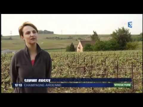 Reportage de la Maison de Champagne Cossy