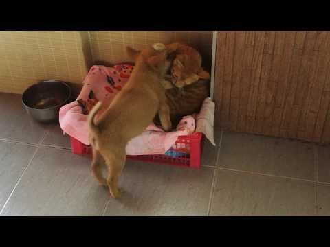 Cute cat and dog | 法華 and Silly playing 2