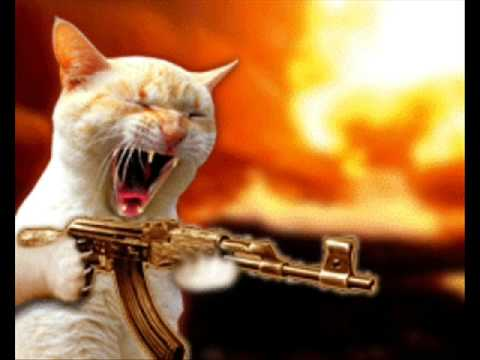 Cats And Dogs Fighting With Guns
