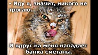 Веселые картинки. Приколы с кошками.