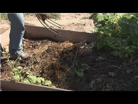 Bug Control : Tips to Get Rid of Fleas in Yard - YouTube