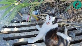 The cat was left on the side of a busy road, paralysed & bleeding to death  Takis Shelter