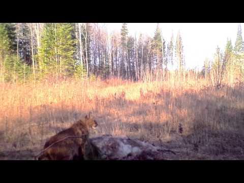 Wildlife Sightings In Northern Michigan