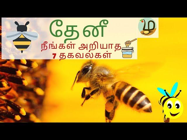 தேனீக்கள் ஏன் முக்கியம் ? 🐝| 7 Unknown facts about Bees in Tamil