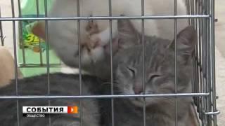 """Приют для животных """"Твои друзья"""" (20 мая)"""