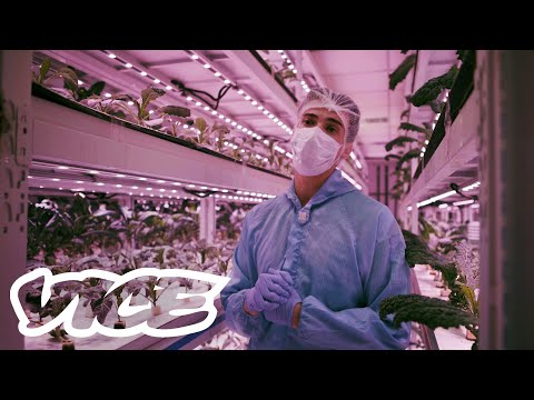 Farming In A Concrete Jungle: How Singapore Is Securing Its Future Food Sources - VICE